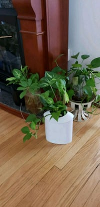 House plants. Price vary from $10-$20. Obo Toronto, M9M 1L1