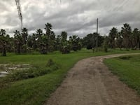 43 acres for sale.  Office on property warehouse and mechanic shop corner of 39 and knights griffin rd Plant City, 33566