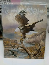 American bald eagle perched tree metal sign Vancouver, 98662