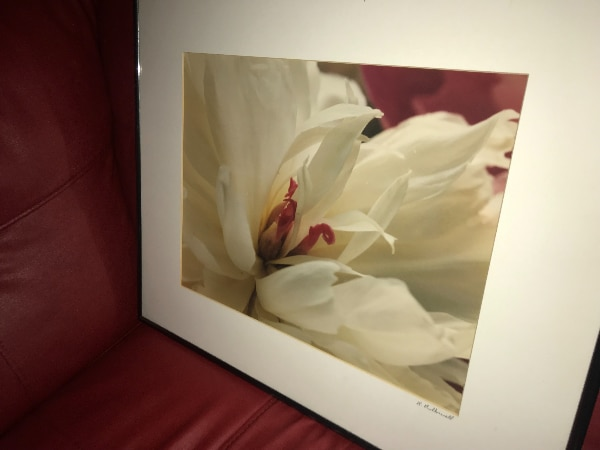 Used 2 Framed Art Prints Butterfly Floral Flowers For Sale In