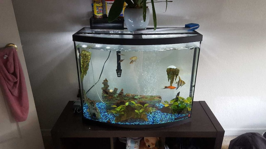 Used 35 gallon fish tank 4 months old brand new in savannah for 35 gallon fish tank