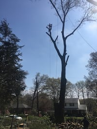 Tree cutting Hyattsville, 20782