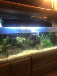 55 gallon TRUVU acrylic fish tank. Awesome tank but I'm moving must go Redwood City, 94062