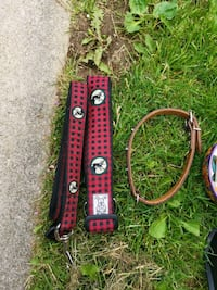 Large dog collar and leash