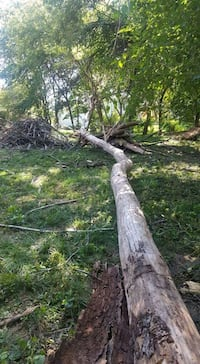 tree trimming and removal Omaha