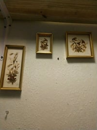 3 Pictures Of Framed Real Flowers Charleston, 29414