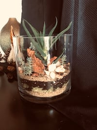 Live succulents in glass container  Irving, 75063