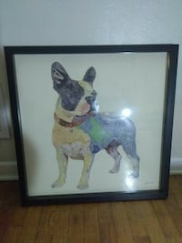 French bull dog picture Lansing, 48910