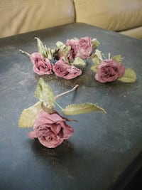 five pink Rose flowers