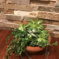 Nice Succulents in the new brown hanging pot Aurora, 80012