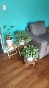 Rare houseplants for sale (plant stands excluded) Kitchener, N2A 4K9