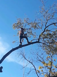 TREE TRIMMING AND TREE REMOVAL FREE ESTIMATE  Rowlett, 75089