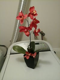 black potted red moth orchids 151 mi