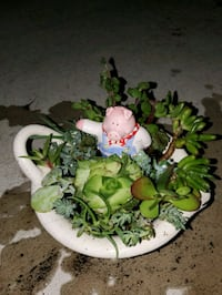 Country pig succulent arrangement  Chula Vista, 91910
