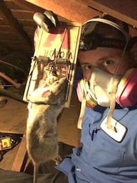 Rodent Control & Insulation Removal  Pasadena