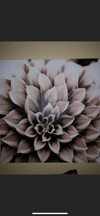 Beautiful canvas flower picture. It's 46 x 46