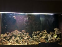700 gallon fish tank Alexandria, 22310