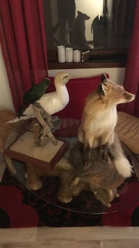 Brown Fox Taxidermy