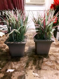2 Green Linear Artificial Plants with Ceramic Pots