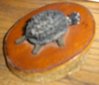 not a real turtle it a nick nack Mesa