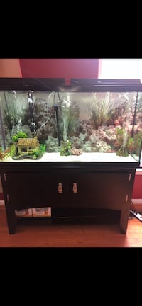 black framed clear glass fish tank Herndon, 20171