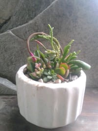 Living succulent arrangement