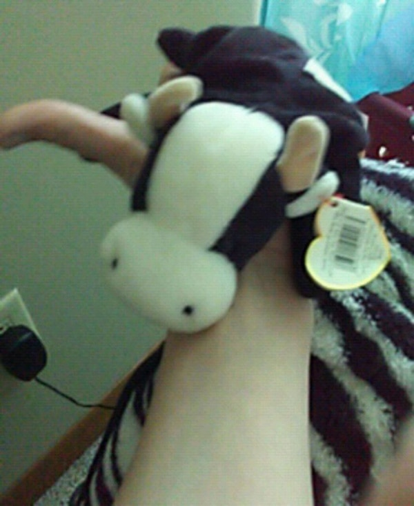 Used Black Cow Plush Toy For Sale In Durant Letgo