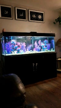 150 gallon and 5 feet is long comes averaging  London, N6K 1L4