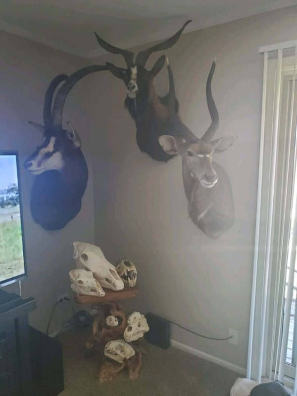 Taxidermy skulls and mounts