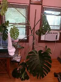 green potted leaf plant Statesville, 28625