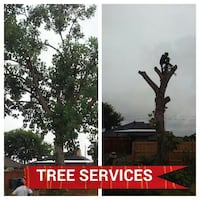 TREE TRIMMING AND REMOVAL PRICES START $75 Rowlett, 75089