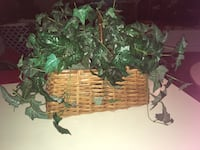 Beautiful Ivy Basket Decor! Mississauga, L5R 2K6