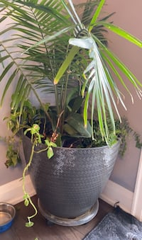 2 x Large Plant vase SOLD AS IS. Toronto, M9R 3Z9