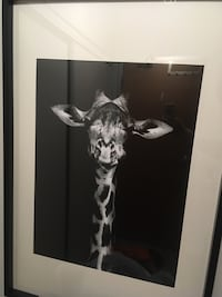 Giraffe picture-black and white. Good quality framing. 550 km