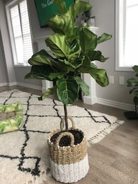 green leaf plant with brown pot Pickering, L1X 2R2