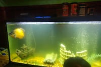 65 gallon fish tank with fish and accessories  Richmond, 23230