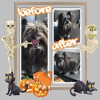 Dog grooming Mount Pleasant