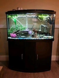 45g fish tank with everything