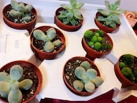 Beautiful succulents, non toxic and good air purifier