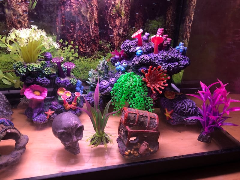 10 gallon fish tank complete set up with decorations, fake coral, plants, rocks, filter and 5 fish!!! f7dd423a-5b8c-4aed-a551-46ae8fd9fd61