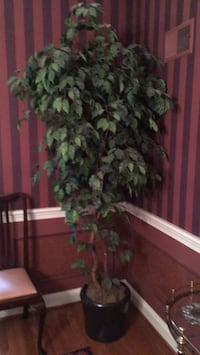 Artificial ficus tree 6 feet tall with ceramic planter that by itself is worth in excess of $100. The price includes both the ficus tree and the planter Bethesda, 20817