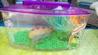 Fish tank 10inx4in colorful