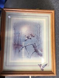 Framed Wildlife Picture  St Peters