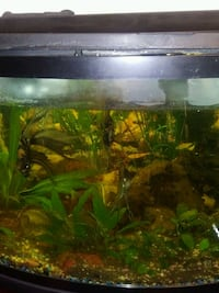 Fish tank with 7 fish and all supplys