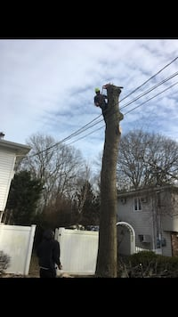 Long Island Tree work reasonable price 12 years  experience  Bay Shore, 11706
