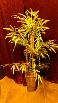 Fake bamboo plant Hagerstown, 21742