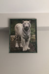 White tiger wall picture