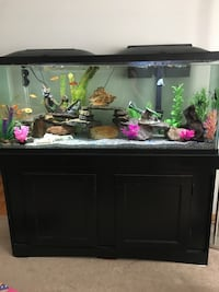 55 Gallon Fish Tank, Accessories & Fish Ottawa, K1K 3R9