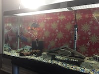 45 gallon 4 feet long comes with everything  London, N6K 1L4