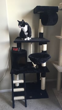 Cat Tower Los Angeles, 90012